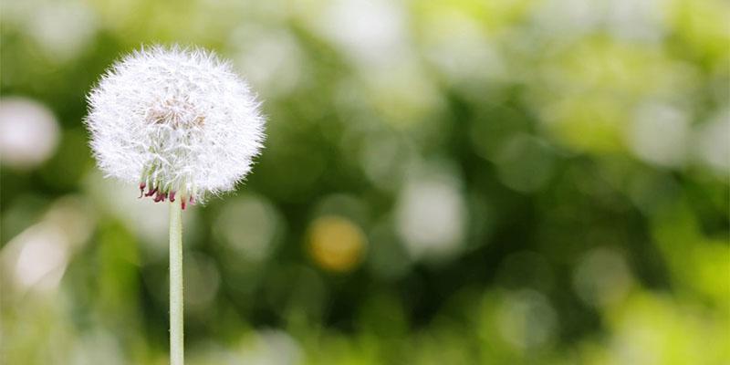 10 μύθοι για τις εποχικές αλλεργίες